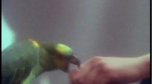 My Own Way Duran Duran parakeet bites Nick Rhodes